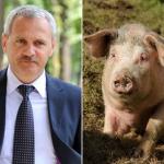 dragnea-porc